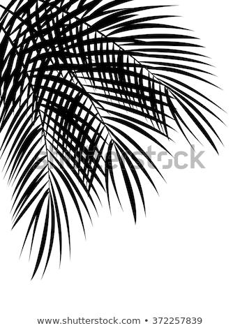 Hurma ağacı siluet çerçeve gündoğumu palmiye ağaçları gökyüzü Stok fotoğraf © saje