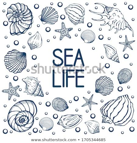 sea shells on hand stock photo © wjarek