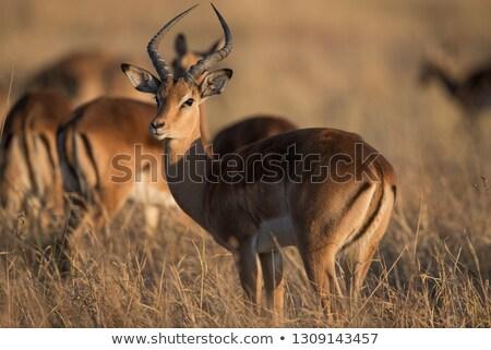 Vadvilág vad szabad Afrika számítógép természet Stock fotó © Livingwild