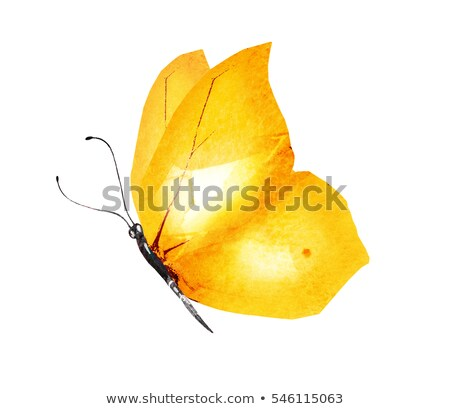 Brown and Yellow Butterfly Stock photo © rhamm