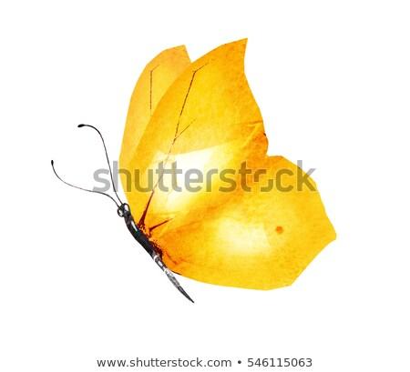 Bruin Geel vlinder blad tuin Stockfoto © rhamm