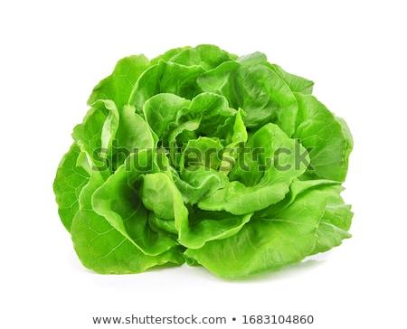 cabbage head isolated on white background stock photo © alinamd