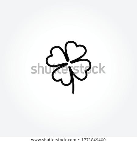 Trébol trébol día de san patricio fiesta vacaciones irlandés Foto stock © lirch