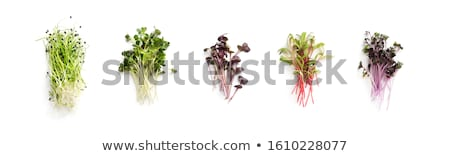 The healthy diet. Fresh sprouts isolated on white background  Stock photo © wjarek