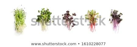 新鮮な · 画像 · かなり · 農家 · 苗 · 自然 - ストックフォト © wjarek