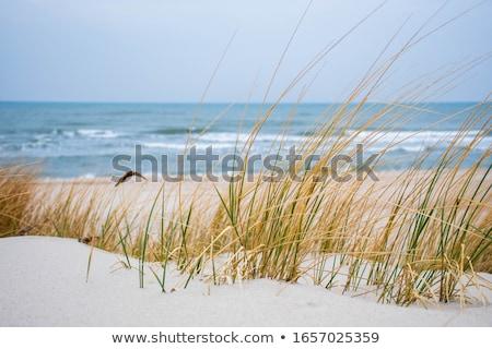 Gyönyörű tengerpart Balti-tenger fa természet tenger Stock fotó © meinzahn