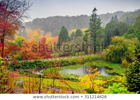 Foto stock: Adelaide · colinas · flores · Australia · cielo · árbol