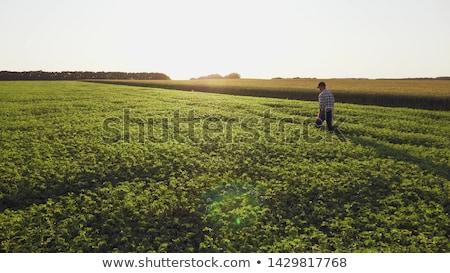 Veld hemel landschap Blauw boerderij horizon Stockfoto © yelenayemchuk