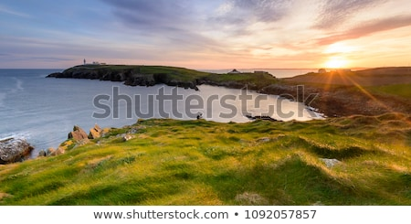Wild manier zonsondergang kustlijn bloemen gras Stockfoto © morrbyte