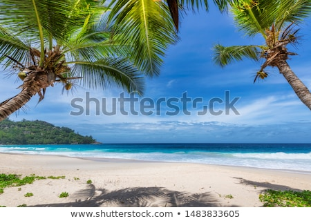 Tropical island beach landscape Stock photo © Kacpura