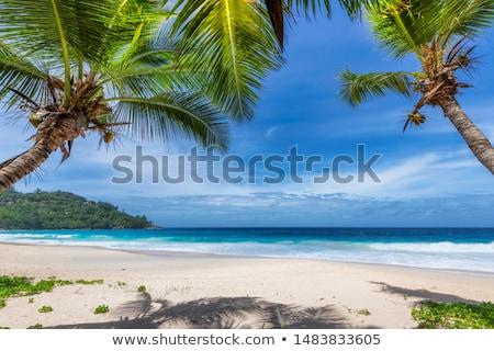 plaj · mavi · gökyüzü · üç · renkli · parlak · bo - stok fotoğraf © kacpura