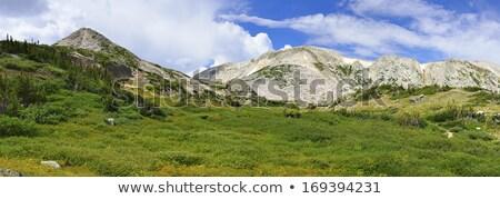medicine bow mountains panorama stock photo © pixelsaway