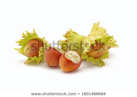 Vers hazelnoten voedsel noten geïsoleerd Stockfoto © Digifoodstock