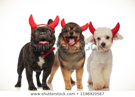 Sevimli köpekler aşınma şeytan halloween Stok fotoğraf © feedough
