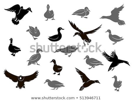 caçador · caça · pato · esportes · pistola - foto stock © goce