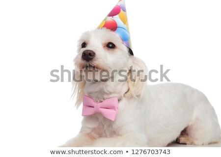 вечеринка · красочный · группа · пластиковых · празднования - Сток-фото © feedough