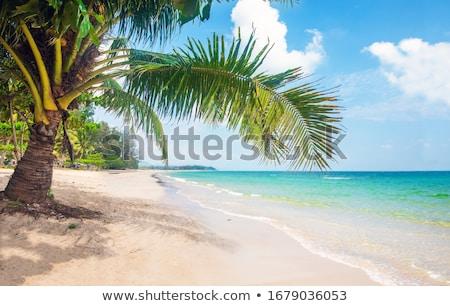 Ocean scenes with coconut trees and island Stock photo © colematt