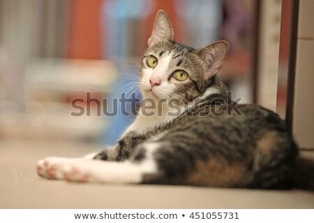 cabeça · tiro · cabelo · tigre · ambiente - foto stock © catchyimages