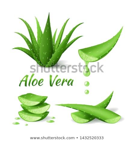 Stok fotoğraf: Ayarlamak · aloe · gerçekçi · yeşil · bitki · yaprakları