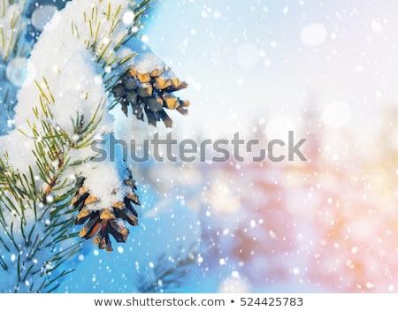 зима праздник природы декораций снега Сток-фото © Anneleven