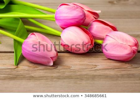 Fresh Beautiful Tulips Photo stock © Taiga