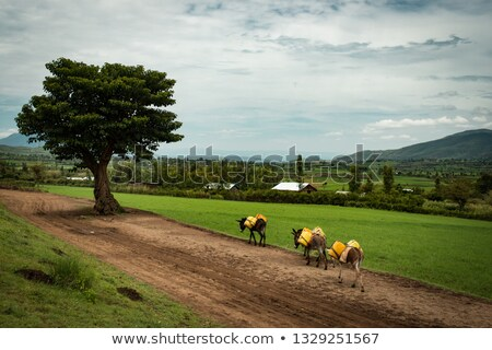 donkey on the road Stock photo © taviphoto