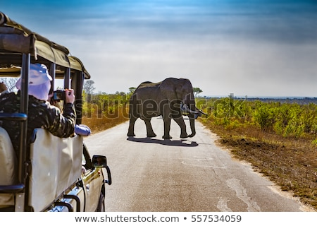 Fil Güney Afrika dev boğa Stok fotoğraf © timwege