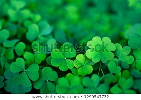 клевера весны зеленый грязи почвы новых Сток-фото © macropixel