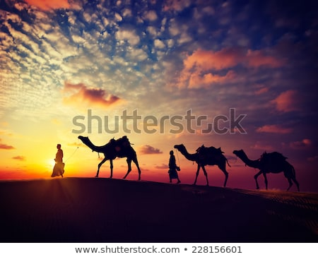 cameleers with camels in desert  - vintage retro style Stock photo © Mikko