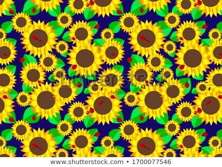 Mariquitas vuelo alrededor girasol ilustración flores Foto stock © bluering
