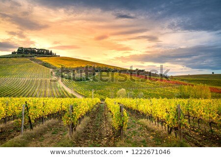 Chianti Stock photo © boggy