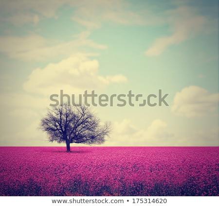Summer landscape in muted tones Stock photo © Kotenko