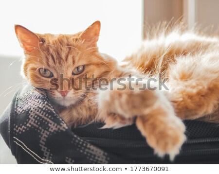 Pluizig kat slapen rugzak kind achtergrond Stockfoto © galitskaya