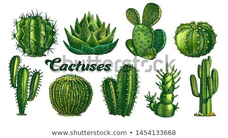 Color houseplants Vector set Stock photo © netkov1