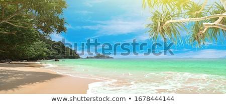 Tropical beach with palms and bright sand Stock photo © karandaev