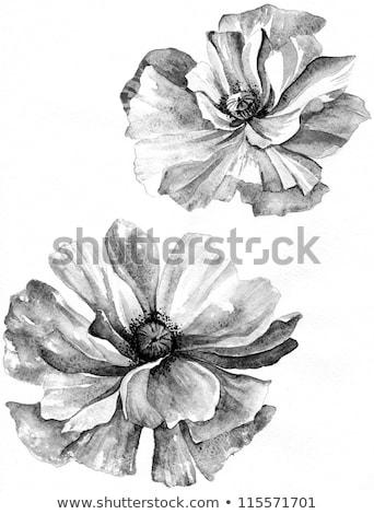 Witte bloem vuil Stockfoto © devon