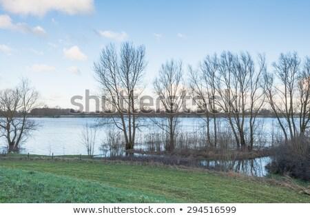 tree at dutch lake stock photo © ivonnewierink