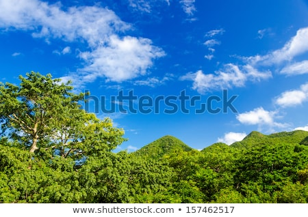 Green Hill with Palm Trees in San Andres, Colombia Stock photo © jkraft5
