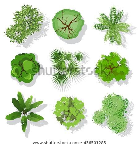 impressionante · folha · verde · reflexões · espelho · isolado · branco - foto stock © hraska