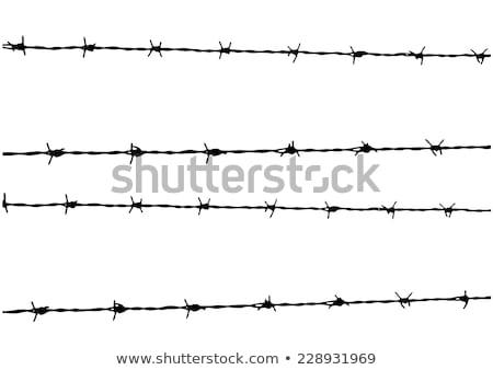 Prikkeldraad vrijheid blauwe hemel veiligheid oorlog boerderij Stockfoto © thomaseder