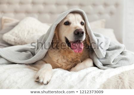 tél · kutya · tájkép · fedett · hó · természet - stock fotó © Sportactive