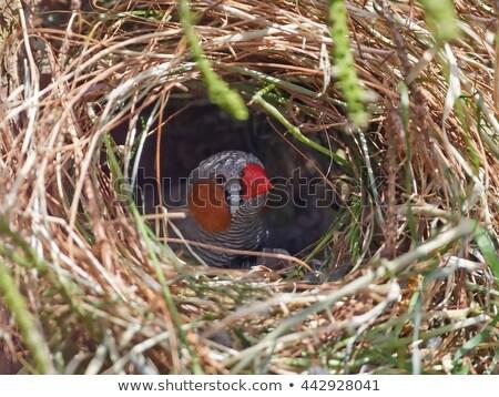 Zèbre bébé mains oiseau plein Photo stock © danielbarquero