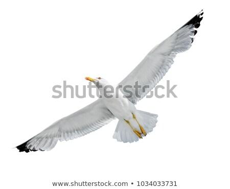 Sirály repülés kék ég égbolt szépség madár Stock fotó © chris2766