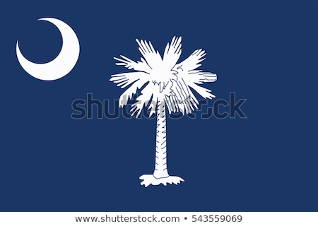 Bandeira South Carolina pormenor vento Foto stock © creisinger