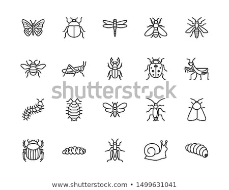 Sign with insects and plants Stock photo © bluering