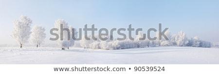 Stok fotoğraf: Alan · ağaçlar · kar · gökyüzü · ağaç · güneş