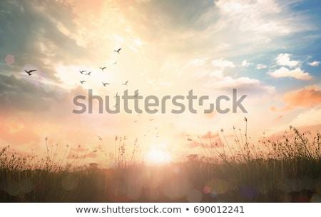 夏 蜂 戻る 光 花 ストックフォト © mobi68