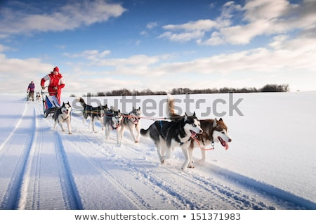 Woman on a dog sled Stock photo © IS2
