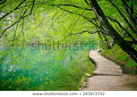 спокойный лес пешеходный мост открытие реке воды Сток-фото © THP