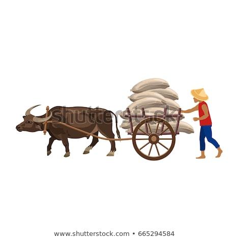 farmer buffalo cart Stock photo © watcartoon